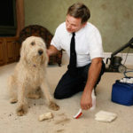 Most Effective Carpet Cleaning D.I.Y. Tips in Menifee Carpet Cleaners
