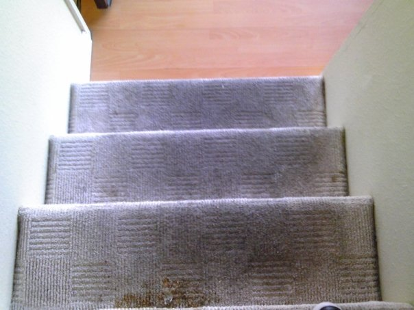 Methods and Benefits of Carpet Cleaning Menifee Carpet Company